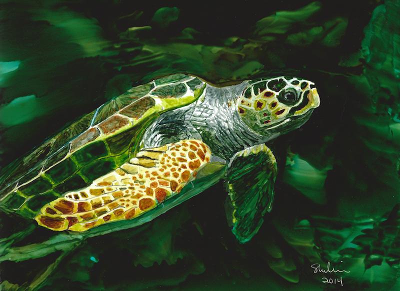 Sea Turtle 1000 x 750 copy