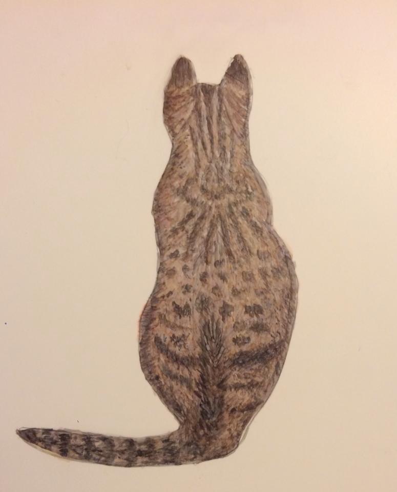 Erin DePino Cat