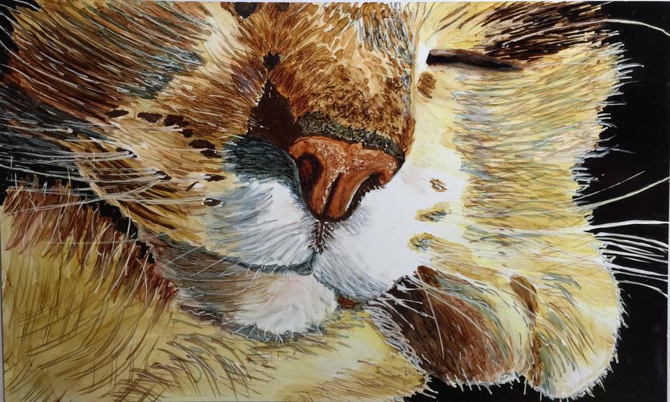 Britt Gastreich Sleepy Cat