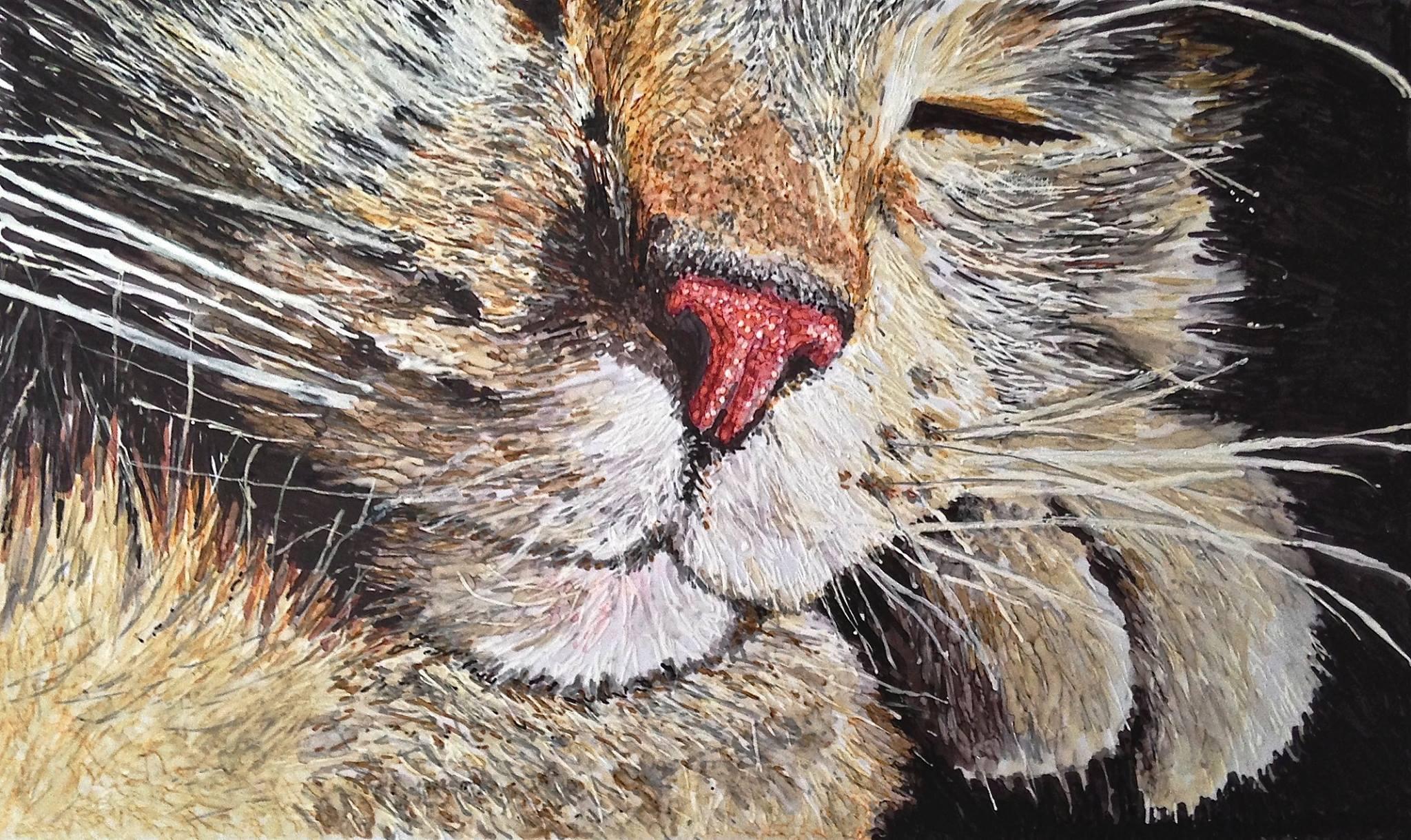 Elaine Byers Kalmbach Sleepy Cat