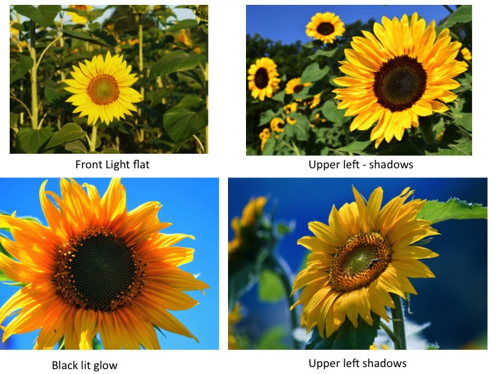 better-sunflowers